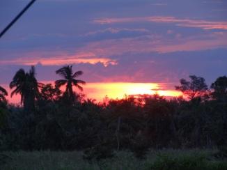 sunset over treetops