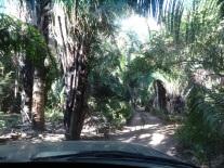secret jungle path