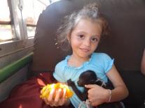 monkey on the bus