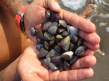 clams!