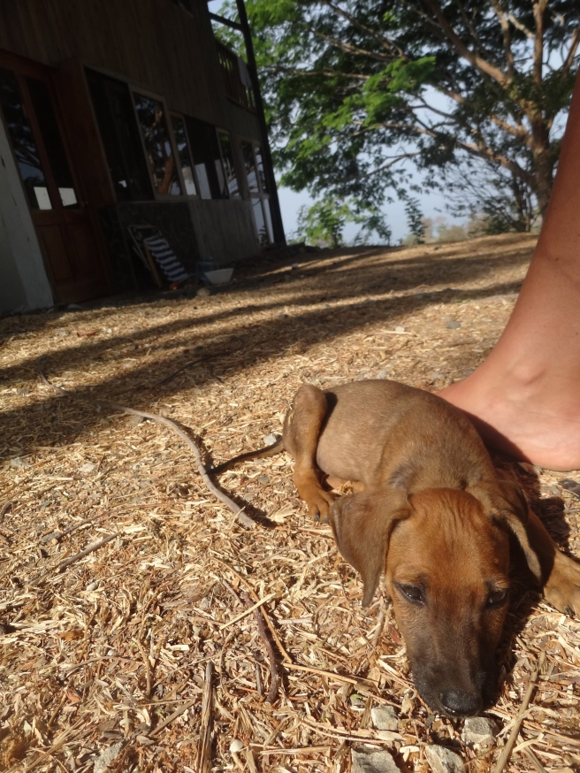 puppy on foot