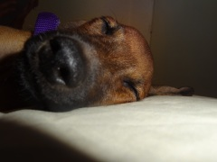 asleep at home