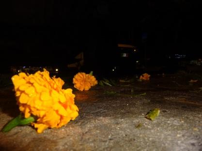 fallen flowers