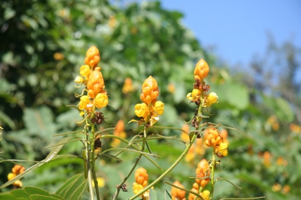 Yellow wild flowers