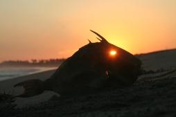 sunset through fisheye